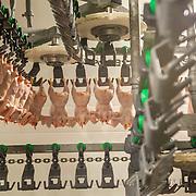 Ytterøykylling - Chicken factory