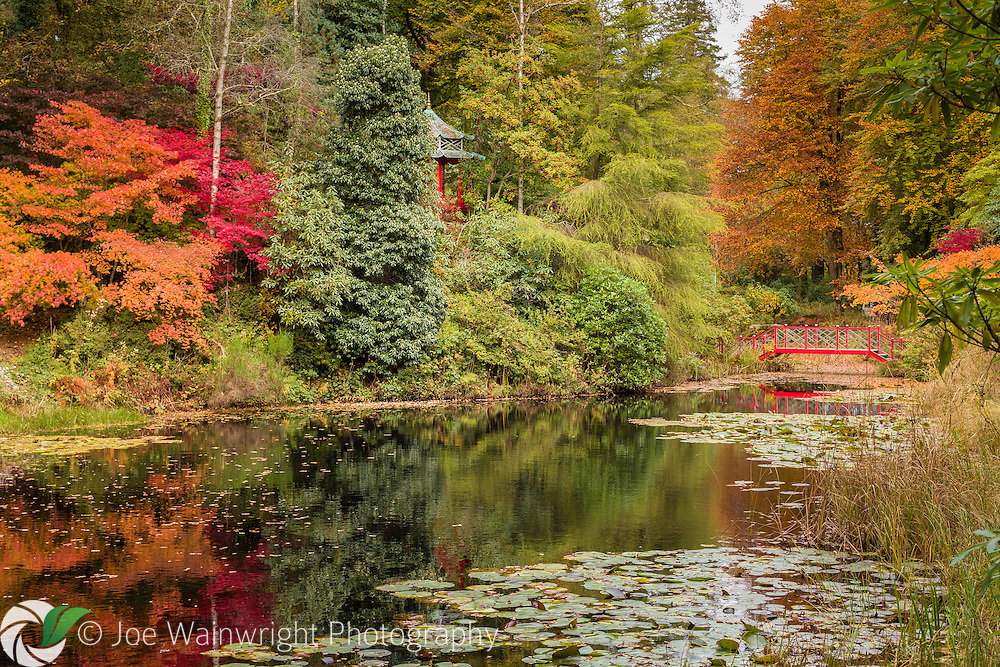 Vivid autumn colours reflected in the lake in the wooded Japanese Garden at Portmeirion, North Wales - photographed in October