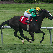 Noble Ready & jockey Joel Rosario wins the $34K purse during The Maiden Special Weight race race Saturday, June. 16, 2016 at Delaware Park Race Track in Wilmington Delaware.