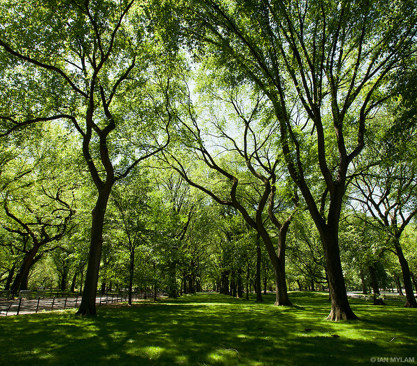 Spring in Central Park - New York City, U.S.A.