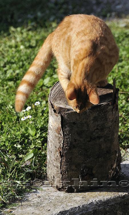 Cat of Unterbergen