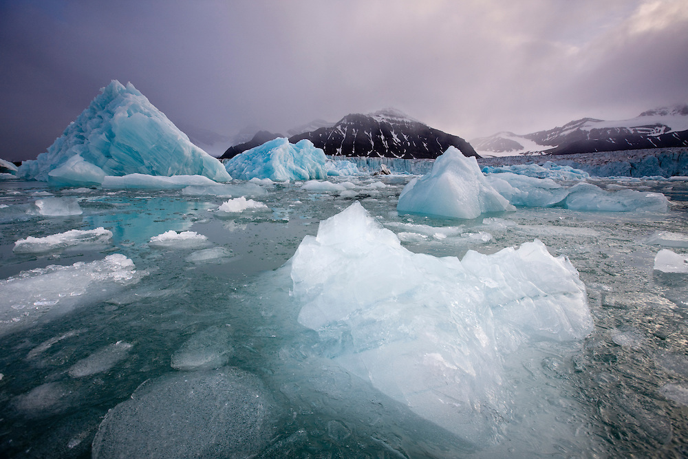Norway, Svalbard, Spitsbergen Island, Deep blue icebergs floating near face of Sveabreen Glacier in Nordfjorden on summer evening