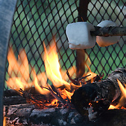 Two marshmallows roast on a stick over a fire in a backyard fire pit.