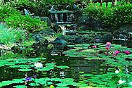 Bali Water Garden