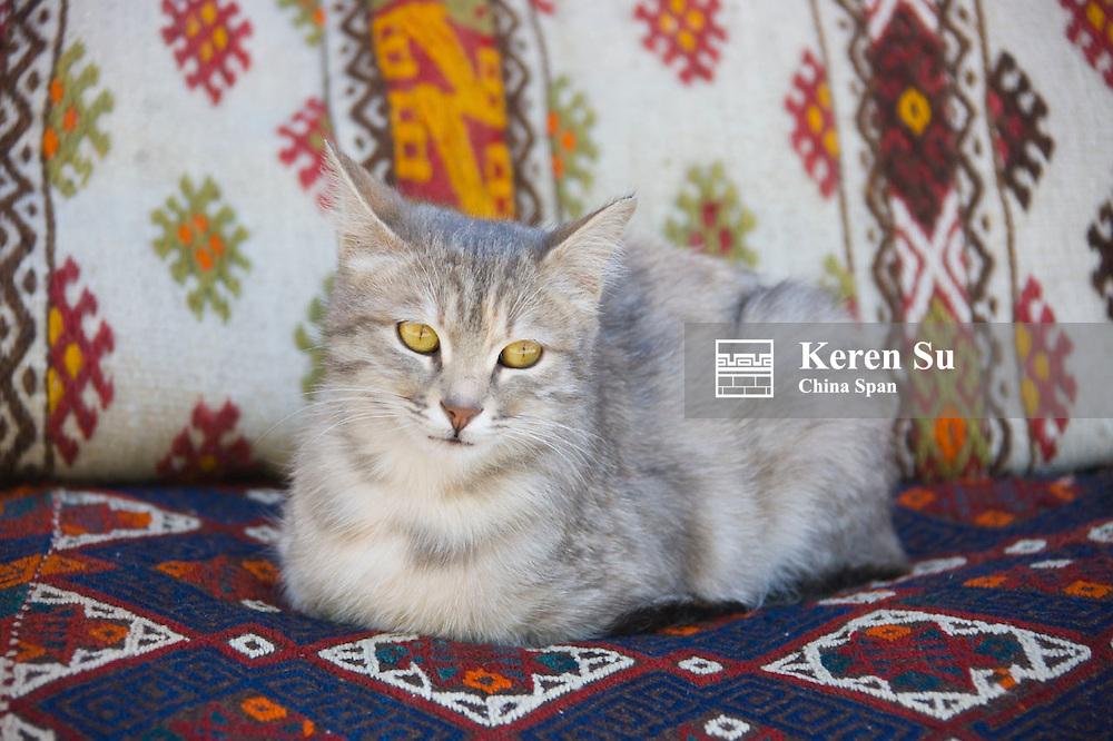 Cat on rug, Turkey