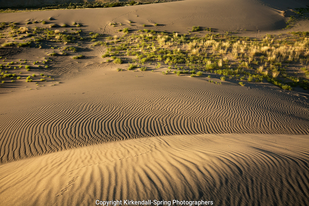 ID00672-00...IDAHO - Patterns on the sand dunes at Bruneau Dunes State Park.