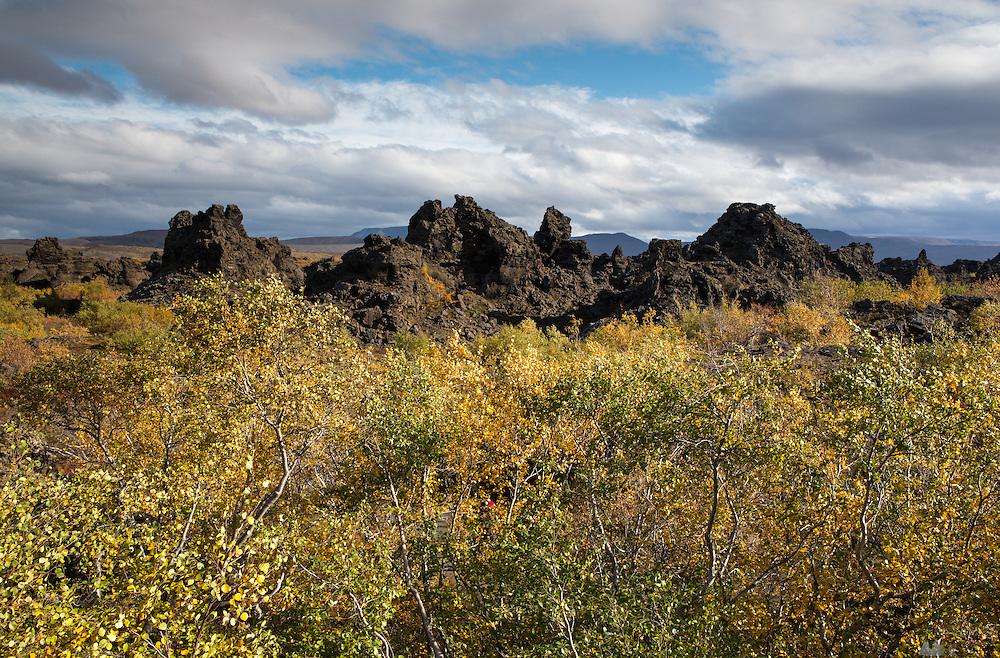 Autumn leaves at Dimmuborgir, on Lake Myvatn, North-East Iceland