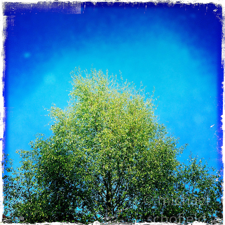 Tree..Hipstamatic images taken on an Apple iPhone..©Michael Schofield.