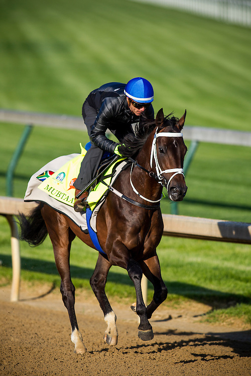 April 29, 2015: Mubtaahij gallops in preparation for the Kentucky Derby at Churchill Downs Louisville Ky. Alex Evers/ESW/CSM