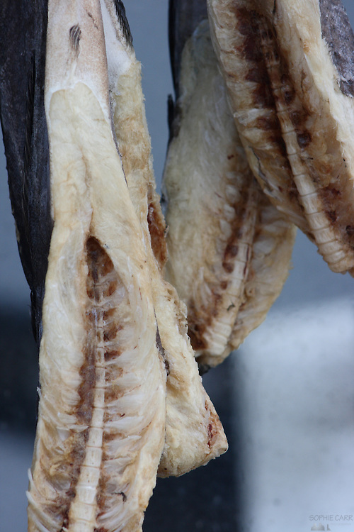 Cod hanging up to dry in a village on the south side of Lake Myvatn in Northern Iceland