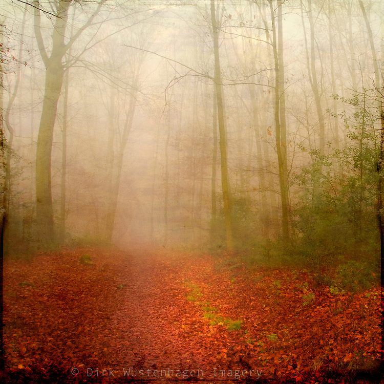 Forest path in Fog