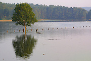 Elbe floods near Hitzacker. Während des grossen Sommerhochwassers im August 2002 spiegelt sich ein Baum im Elbewasser bei Hitzacker.