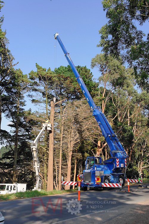 Mobile crane working on tree clearing.<br />