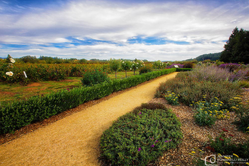 Photo taken at Dry Creek Vineyard in Sonoma, CA.