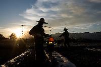 Workers fertilize fields near Louang Namtha, Laos.