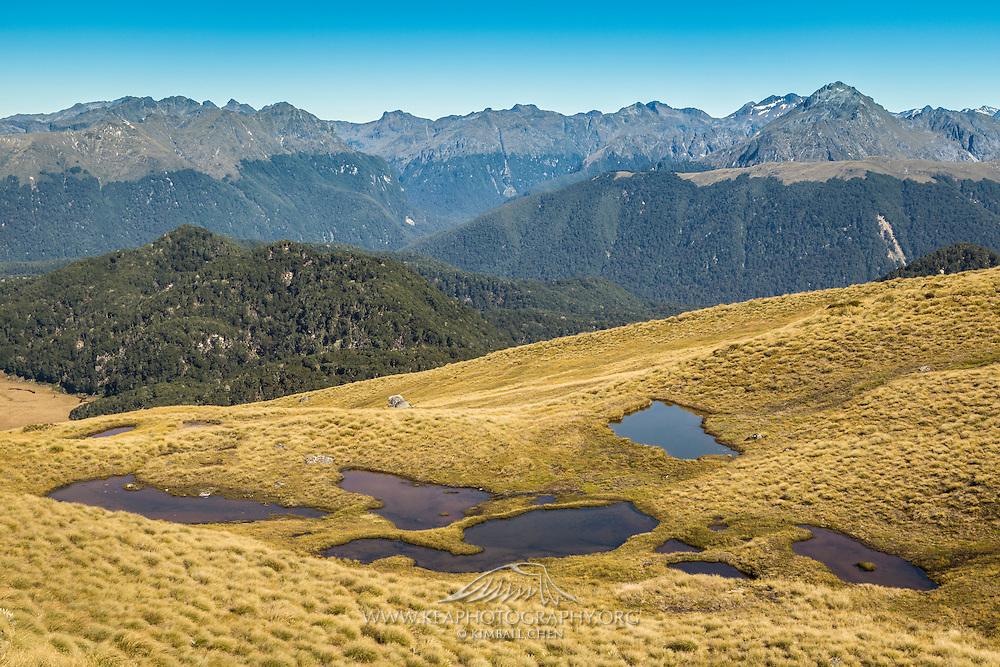 Golden tussock and tarns along Mt Burns Tarns Track, Fiordland.