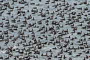 wildlife birding photographs Hains, AK