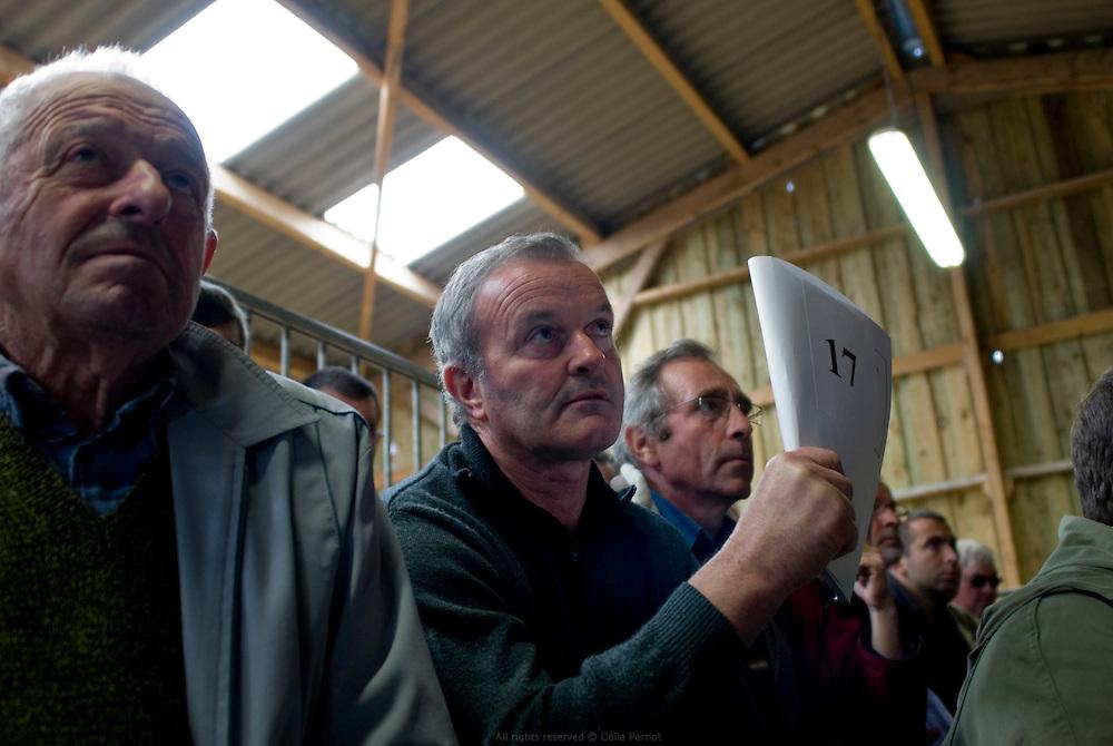 Vente aux enchères annuelle de reproducteurs de la race Parthenaise organisée par les élèves à la station d'évaluation du lycée agricole de Melle, l'une des dernières vente aux enchères de France. Poitou-Charentes 2010.