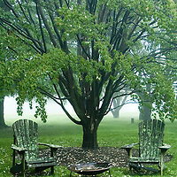 MOSS COVERED CHAIRS AND FOG