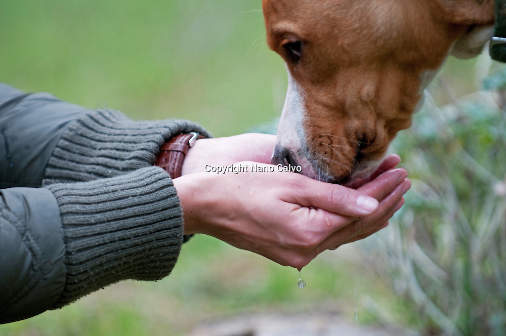 Dog drinks water from owners hands