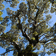 Tree branches make a fractal pattern on the Tuatapere Hump Ridge Track, in Fiordland National Park, South Island, New Zealand.
