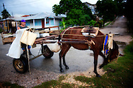 Delivering eggs in Antilla, Holguin, Cuba.