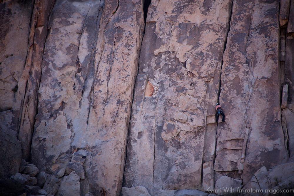 USA, California, Joshua Tree. Rock Climber in Joshua Tree.