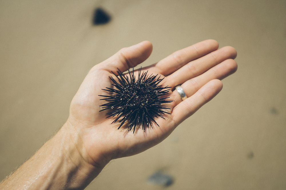 Sea urchins are best friends with your feet. Punta Burros, Mexico