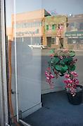 A plastic plant in a shop window. Detroit, USA, 2011