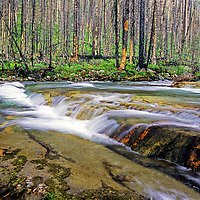 Mineral Creek two years after Trapper Creek fire of 2003. Glacier National Park, Montana.