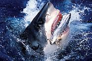 Sharks & Shark Diving