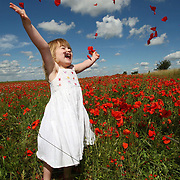"""THREE YEAR OLD MIA    IN A POPPY FIELD NEAR CAMBRIDGE...Spectacular red poppy fields are now a rare sight in the UK, plant conservationists have revealed today (Mon)...The well-loved wild flower could once be found growing among the crops in every cornfield in Britain...But over the past century modern farming has meant these numbers have dramatically declined...Now a blaze of crimson poppies can be found in just one in every 500 fields...""""It's very sad that poppy fields have become such a rarity,"""" said Andy Byfield, a spokesman for the plant conservation charity Plantlife...""""In the past they would have been found in every arable field, but they have declined over the past 100 years and particularly since the Second World War...""""A whole field of poppies is now an unusual sight.""""..Poppies are among 54 species of arable plants in Britain that are now listed as rare or threatened and seven of these have become extinct...Mr Byfield said they had disappeared because of widespread use of weedkillers over the last decades...He said: """"Poppies are one of a range of plant species that used to be present in the arable landscape of Britain...""""Sadly intense farming, in particular the use of herbicides and pesticides since the Second World War, has led to their decline.""""..Poppies flower from June through to late summer. ..Their seeds last for at least 100 years and they tend to spring up in places where the ground has been disturbed...Thousands of poppies grew in the trenches and craters in Flanders during World War One after artillery shells and shrapnel stirred up the earth and exposed the seeds to light...Now artificial poppies are sold for war charities on Remembrance Day in November...The poppy has also been the inspiration for many artists and one of the most famous paintings is Claude Monet's Poppy Fields at Argenteuil...SEE COPY CATCHLINE POPPY FIELDS.."""