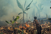 Slash-and-burn agriculture by Indians of Guiana Highlands of Venezuela: boy setting fire to old garden with some banana trees left to cultivate it again; ashes provide fertilizer