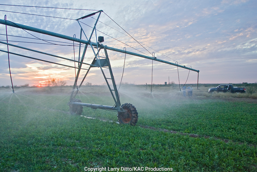 Center Pivot Irrigation System on south Texas ranch at sunset watering alfalfa and lablab (deer food)