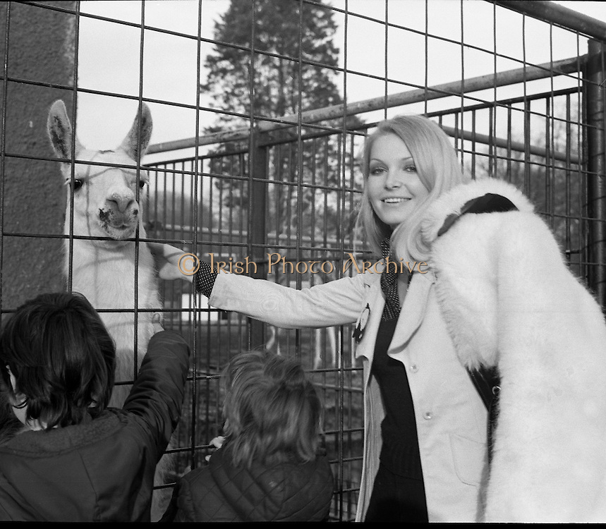 Former Miss World Visits Dublin Zoo.<br /> 1973.<br /> 14.01.1973.<br /> 01.14.1973.<br /> 14th January 1973.<br /> Miss Eva Rueber-Staier, former Miss World from Austria and the &quot;World Wildlife Fund's Anniversary Girl&quot;, paid her first visit to Ireland to open the Shell/BP Irish Wildlife Promotion. As part of the promotion Eva paid a visit to Dublin Zoo in the Phoenix Park, Dublin.<br /> <br /> Image shows Miss Rueber-Staier petting a llama during her visit to the Zoo.