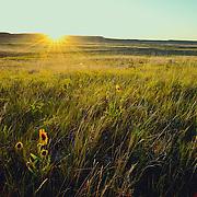 the sun rises on the prairie of eastern montana conservation photography - montana wild prairie
