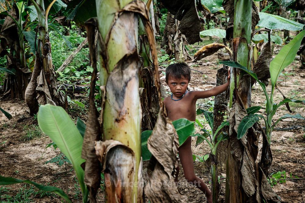 The son of Raimundo, famous shaman walks the wealthy plantation of Banana, Manioc among others plants that his father made grow.