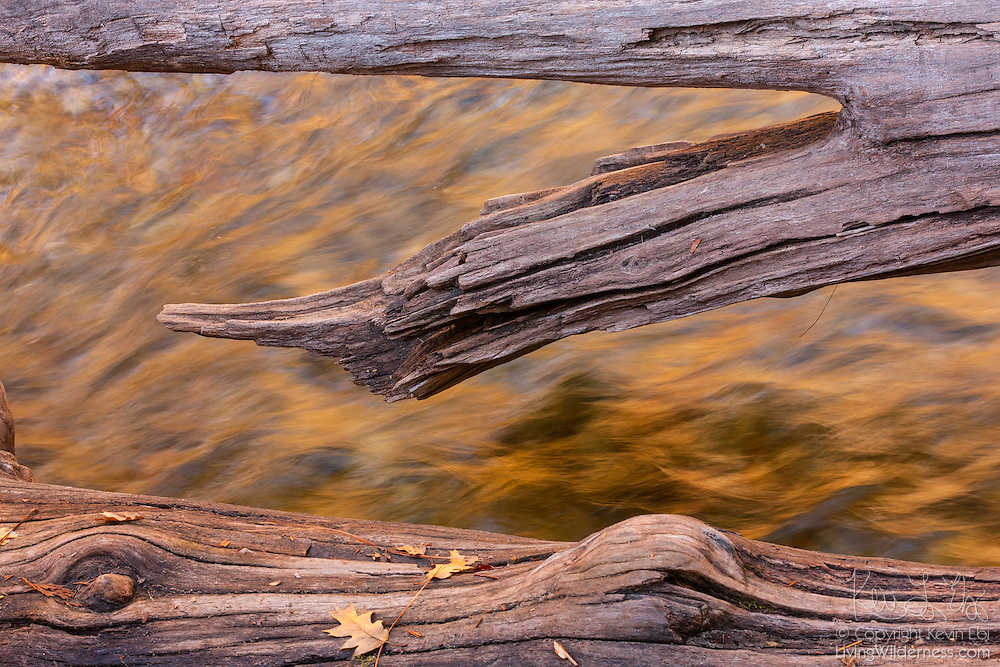 Remnants of a fallen tree stretch across Yosemite Creek in Yosemite National Park, California. The surface of the creek reflects the golden color of the neighboring granite walls at sunrise.