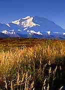 Autumn grasses and McKinley