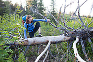 Stephanie Haynes climbs over a down tree while hiking on the Alpine Ridge trail in Kachemak Bay State Park, near Homer, Alaska.