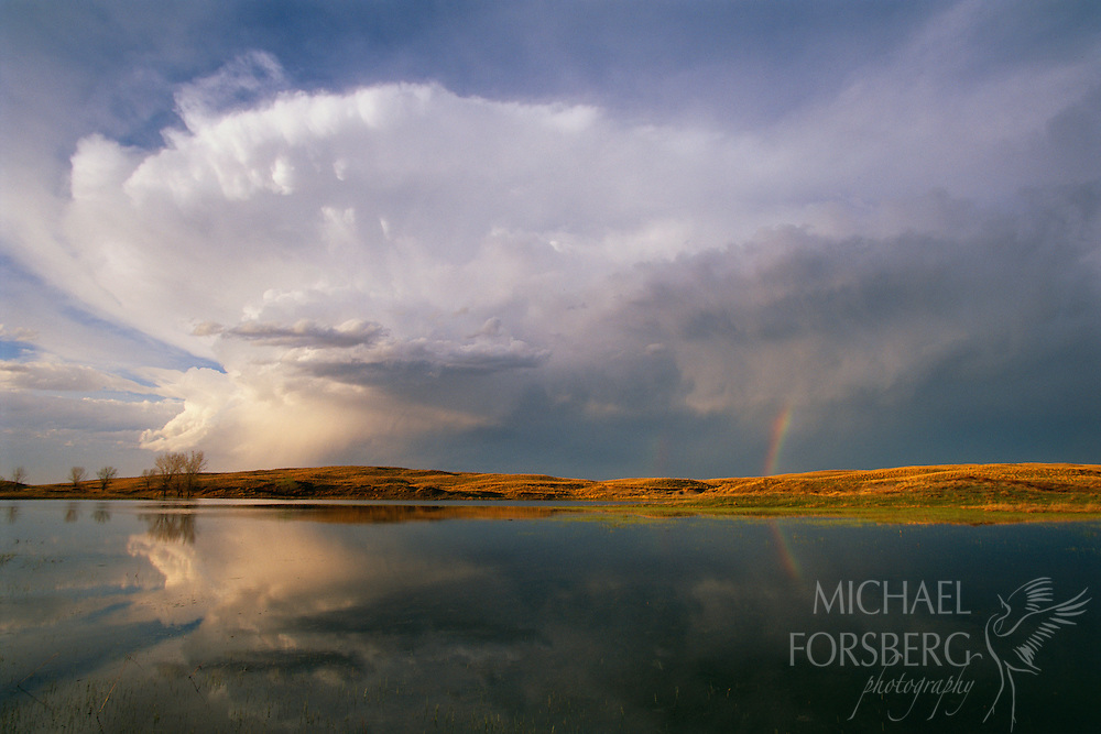 On a ranch in Grant County, towering cumulonimbus clouds and a rainbow are reflected in the waters of a shallow sandhills lake in early May.  Fed by rainwater above and from the vast underground Ogallala aquifer below, these shallow lakes and wetland complexes anchor the tremendous diversity of wildlife found in the sandhills region. Nebraska Sandhills.
