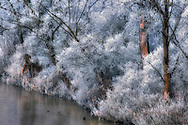 A winter view of the Po River bank, the largest and longest river in Italy, as it looks like from a road bridge near Carignano in Piedmont, Italy. Icy cold temeperatures at the beginning of January have the covered the reeds and trees with thick frost.