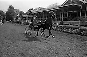 08/05/1964<br /> 05/08/1964<br /> 08 May 1964<br /> R.D.S. Spring Show Ballsbridge Dublin, Winner of Single Harness Championship Cup, Mr. R.J. McFarland of Claddagh, Pond Park Road, Lisburn, Co. Antrim with his black stallion &quot;Hurstwood Ebony&quot; after his win at the Dublin Spring Show.