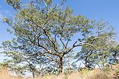 Zimbabwe - Eastern Highlands
