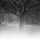 Weston Park, Sheffield 2013