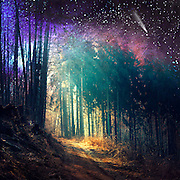 Surreal woodland scenery<br /> Society5 products: http://bit.ly/2b83fE9
