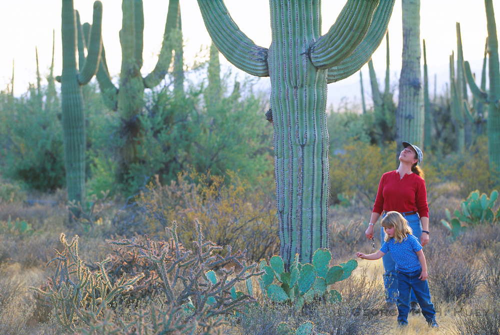 350115-1048B ~ Copyright: George H. H. Huey ~ Hikers on the Desert Nature Trail in the Tucson Mountains among Saguaro cactus and prickly pear cactus. Saguaro National Park, Arizona.