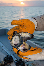 Oyster Industry