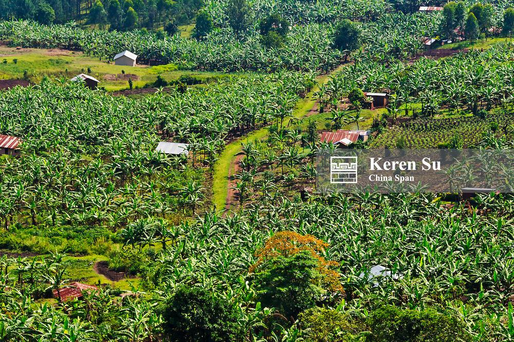 Banana plantation and village houses, southwest Uganda