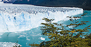 Visit Perito Moreno Glacier in Los Glaciares National Park as a day trip from El Calafate, in southwest Santa Cruz province, Argentina. Easy boardwalks give wide views of Moreno Glacier, an impressive wall of ice 200 feet high and 3 miles (5 km) wide flowing into Lake Argentina. The glacier flows up to 2300 feet thick and originates in the huge Hielo Sur (Southern Icefield) in the southern Andes mountains. For the past 90 years, its advancing has equaled melting (up to 2 meters per day, 700 meters per year), and the terminus has stayed at one location. Flowing ice periodically dams an arm of the lake which rises for a few years then breaks across the nose of the glacier as a crashing river (in March 2004 and 1991). In this 2005 photo, a narrow river flowed across the glacier face which calved large chunks of ice into the water with a loud crash several times per day. The foot of South America is known as Patagonia, a name derived from coastal giants, Patagão or Patagoni, who were reported by Magellan's 1520s voyage circumnavigating the world and were actually Tehuelche native people who averaged 25 cm (or 10 inches) taller than the Spaniards. Panorama stitched from 2 overlapping photos. Published in Wilderness Travel 2015 Catalog of Adventures.